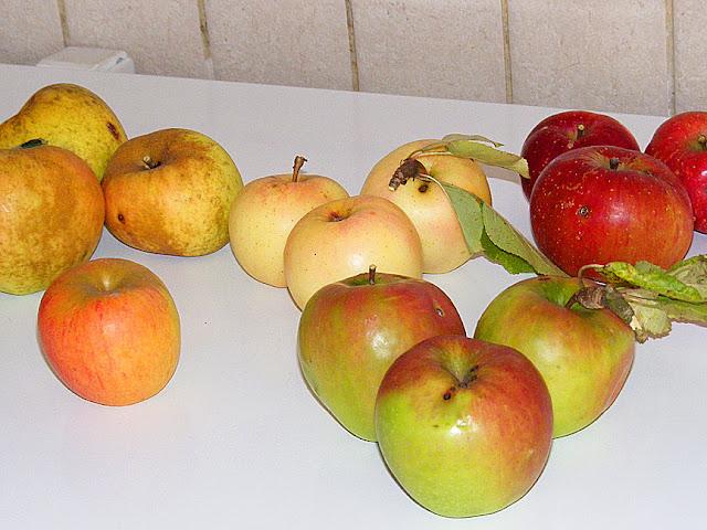 Homegrown apples Reinette grise du Canada, Reine des reinettes, Granny Smith, Golden Delicious, Melrose. Indre et Loire, France. Photo by Loire Valley Time Travel.