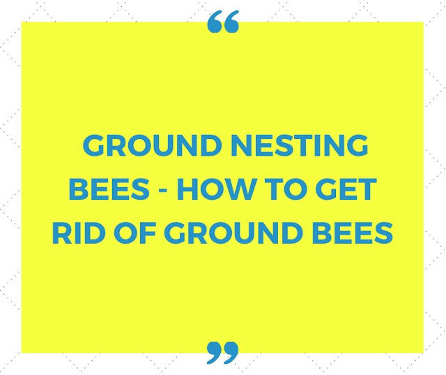Ground nesting bees - How to get rid of Ground Bees