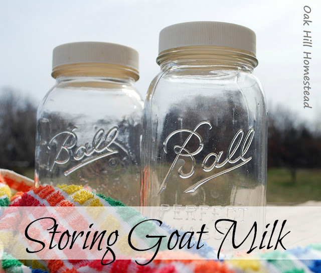 Using Mason jars to store goat milk.