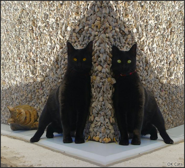 Photoshopped Cat picture •  Two weird black cats. What are they doing [ok-cats.com]