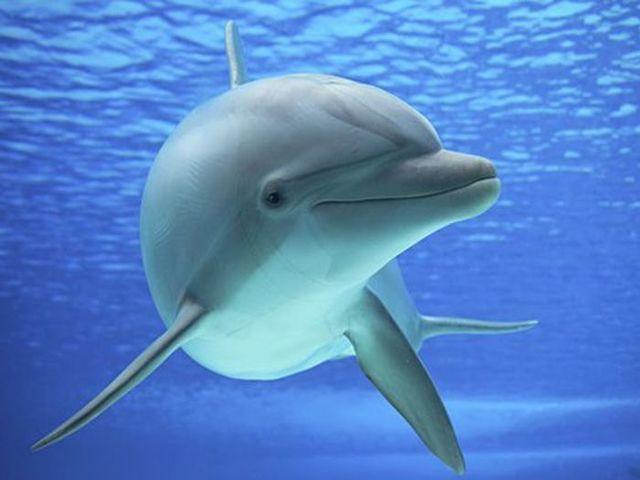 Gambar dan Ikan Lumba Lumba