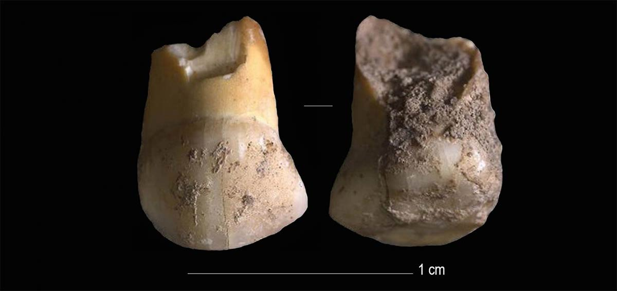 48,000-Year-Old Tooth Belonged to One of the Last European Neanderthals