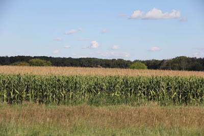 local row crops: corn