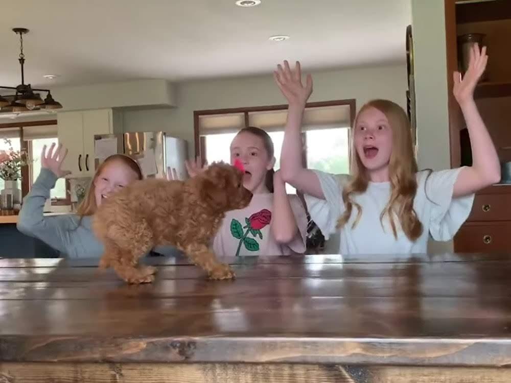 Best Pets Of The Month : 2019年5月に癒やされた微笑ましい動物ビデオの総集編