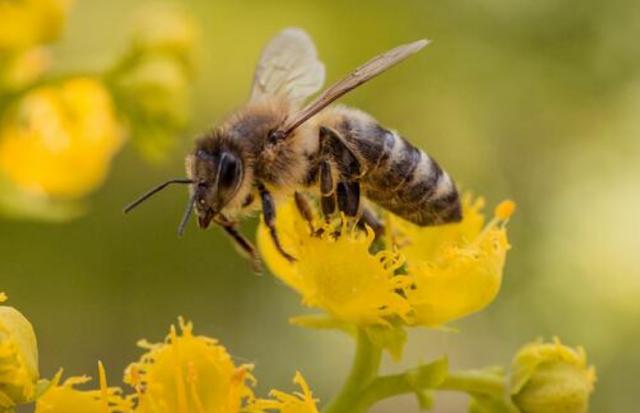 Μέτρα στήριξης της μελισσοκομίας ζητά ο Βασίλης Κεγκέρογλου