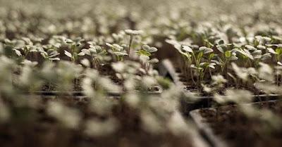 Struktur vegetasi adalah suatu organisasi individu-individu di dalam ruang yang membentuk suatu tegakan (Muller-Dombois dan Ellenberg, 1974; Nabilah, 1996). Ditegaskan juga bahwa elemen pokok dari struktur adalah bentuk pertumbuhan, stratifikasi dan penutupan (coverage). Komposisi vegetasi merupakan susunan dan jumlah individu yang terdapat dalam suatu komunitas tumbuhan.