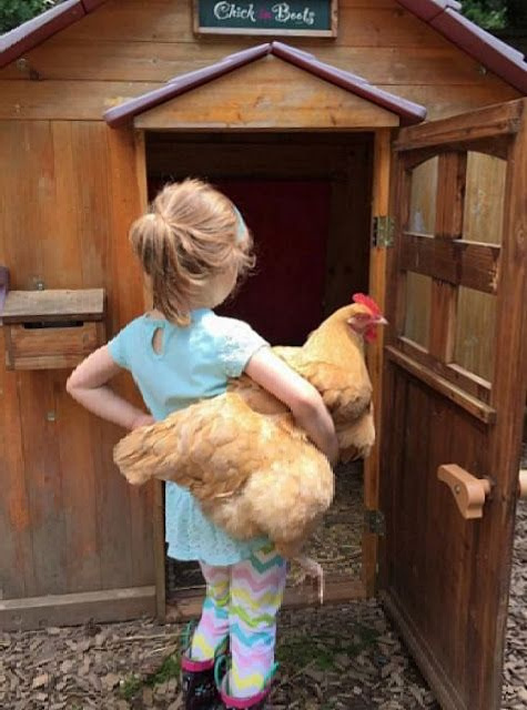 Top Five Kid-Friendly Chicken Breeds