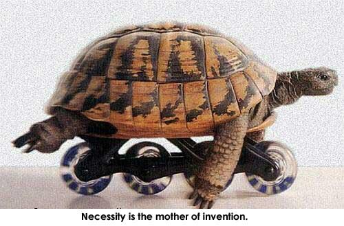 wallpaper funny turtle rain - photo #29