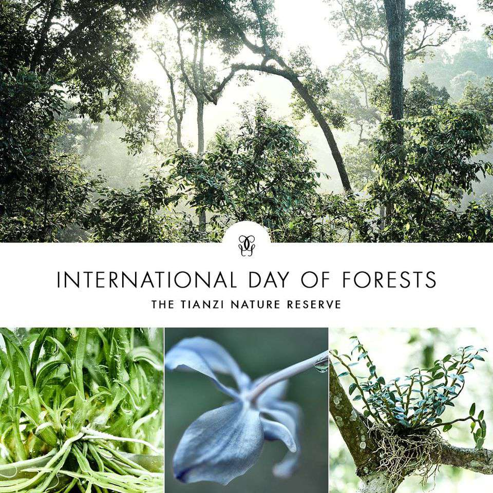 International Day of Forests Wishes for Whatsapp