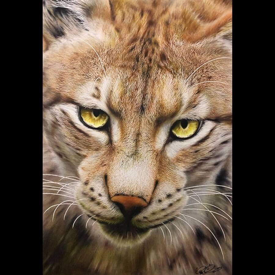 11-Wildcat-Haruki-Kudo-www-designstack-co
