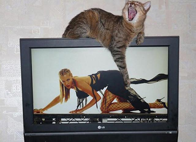 Unduh 76+  Gambar Kucing Lucu Ketawa Imut Gratis