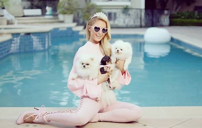 Paris Hilton does not hesitate to consent to each and every one of their pets.