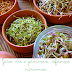 Grãos crus ou germinados: diferenças nutricionais