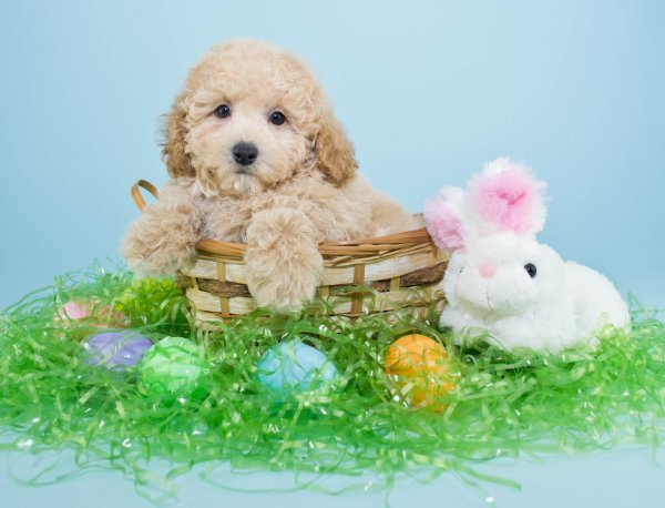Τι να προσέχετε στη διατροφή του σκύλου το Πάσχα