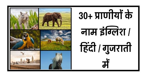 Here is useful list of  Animal (प्राणी)  name in hindi, gujarati and english - प्राणी के नाम गुजराती इंग्लिश / हिंदी में   Animal Name in Hindi and Gujarati.