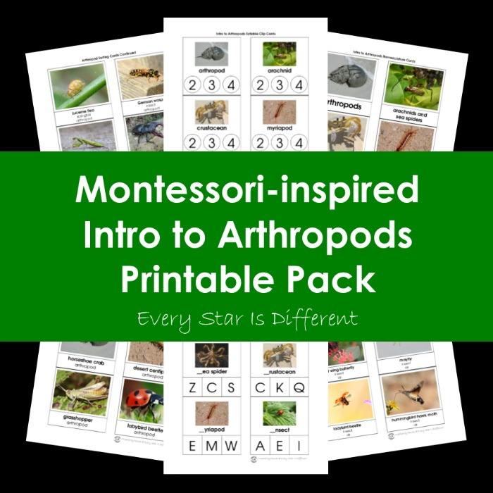 Montessori-inspired Intro to Arthropods Printable Pack Bundle