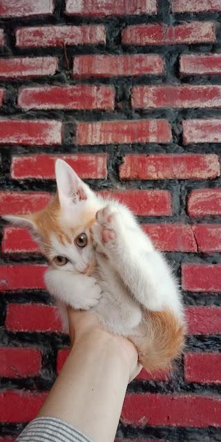 Bagaimana Cara Mengatasi Kucing yang Tidak Mau Makan