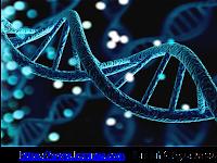 Kerangka manusia bisa diidentifikasi -Keunikan DNA