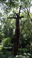 Old tree trunk - Anne's garden, Stratford, CT