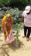 जन्माष्ठमी पर किया पौधा रोपण