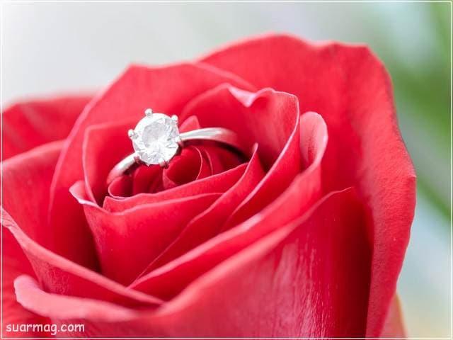 اجمل صور ورد احمر طبيعي رومانسي جميل بجودة عالية