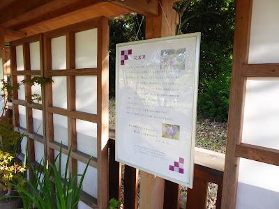 山田池公園の花しょうぶ園 ハナショウブの解説