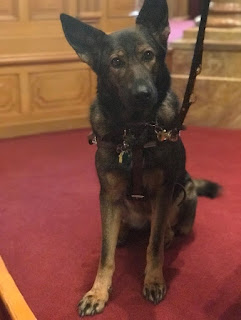 Onyx at the State Capitol during the 2018 NFBCO Day at the Capitol. (Fidelco Guide Dog Foundation)