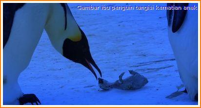 Ke manakah penguin mati pergi?