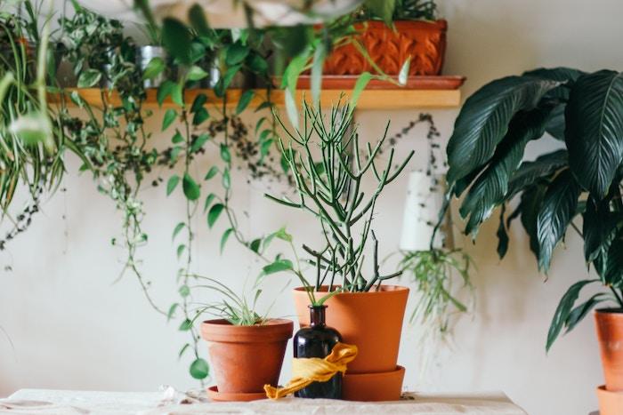 Plantas en la cocina con maceteros de terracota o barro
