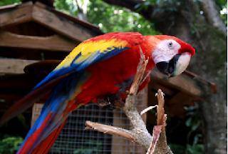 burung cantik dan terindah