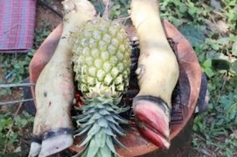 How to cook soup beef leg with pineapple – Beautiful Girl Cooking – Village Food Factory