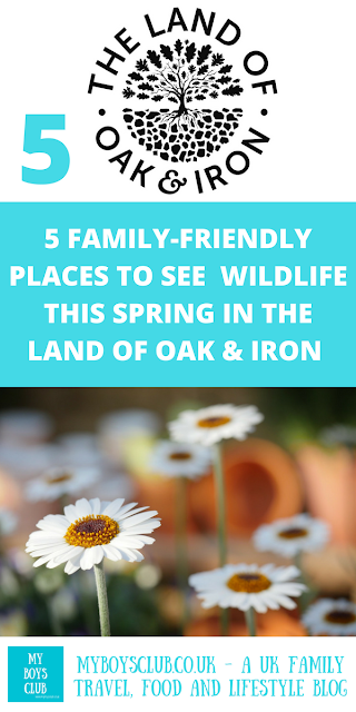 5 family-friendly places to see wildlife this spring in the Land of Oak & Iron