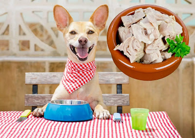 10 toxic foods for dogs