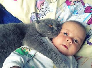 Кот и младенец