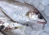 أسماك زيتية تقلل من خطر إلتهاب المفاصل الروماتويدي