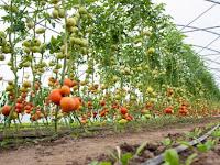 Mengenal Lebih Dekat Hortikultura, yang Suka Berkebun Wajib Baca!