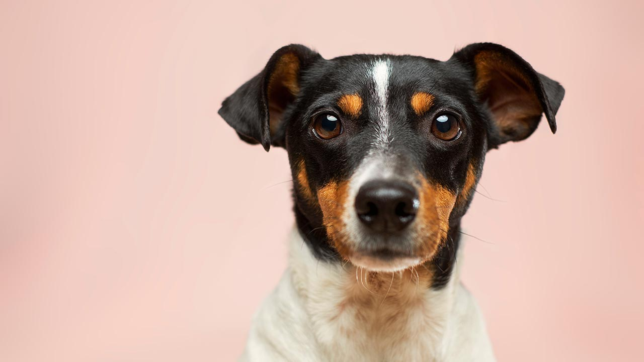 Flatulence in Dogs : How to Reduce Flatulence in Dogs