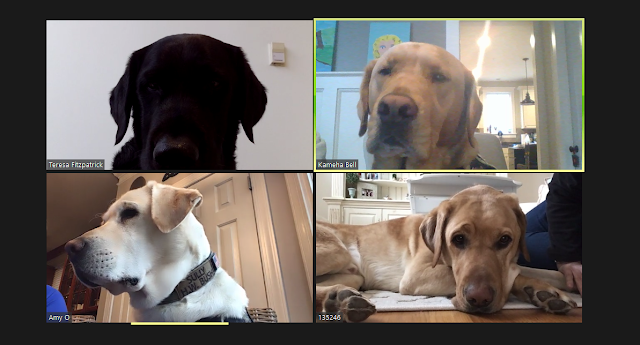 A screenshot of four dogs on a video call.