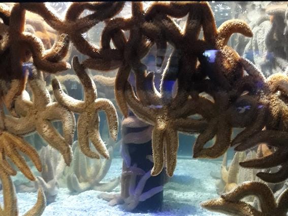 The star fish are bad at social-distancing