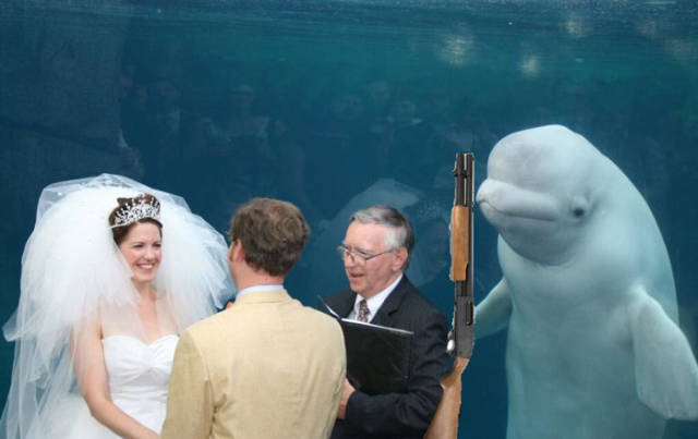 When Beluga Whale Is The Most Important Thing At Your Wedding (26 pics).
