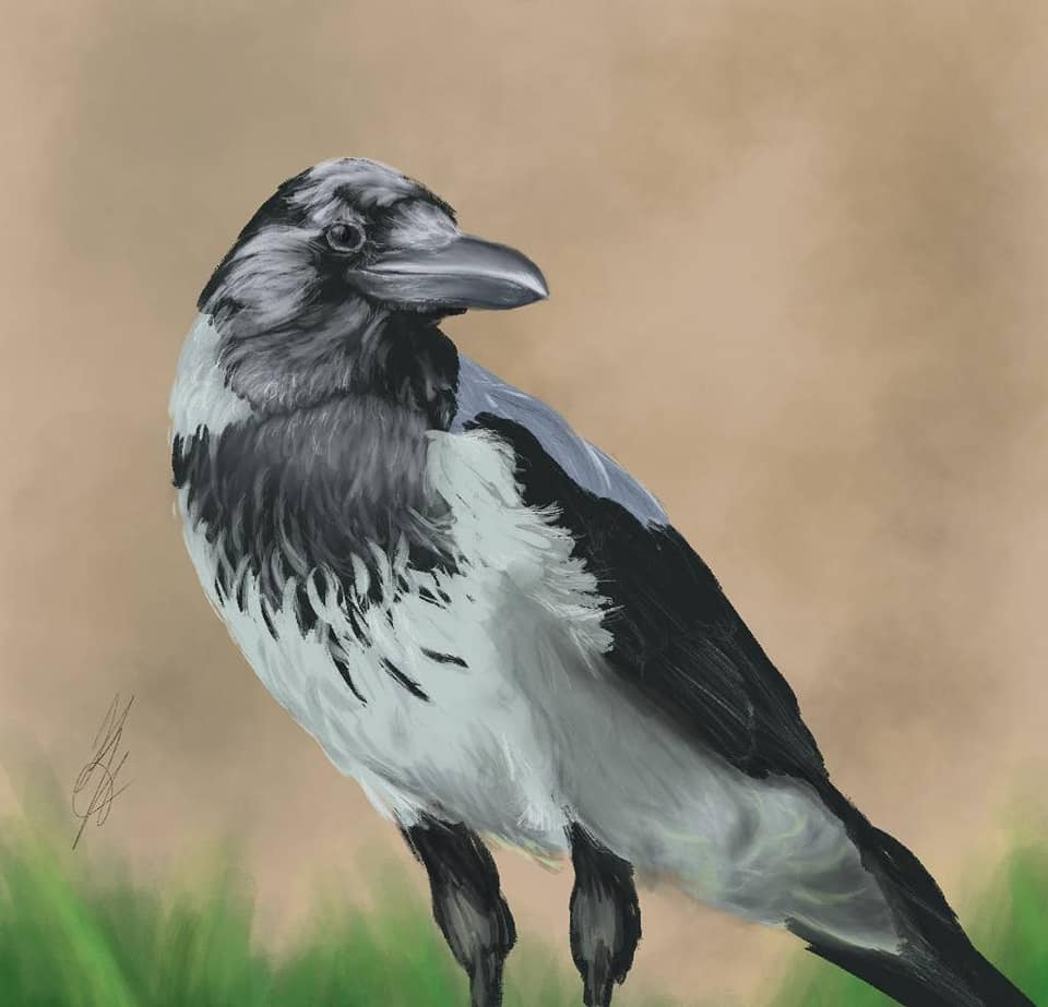 Bird- iPad and Procreate - art by Krista Buynak - BlogFanArt