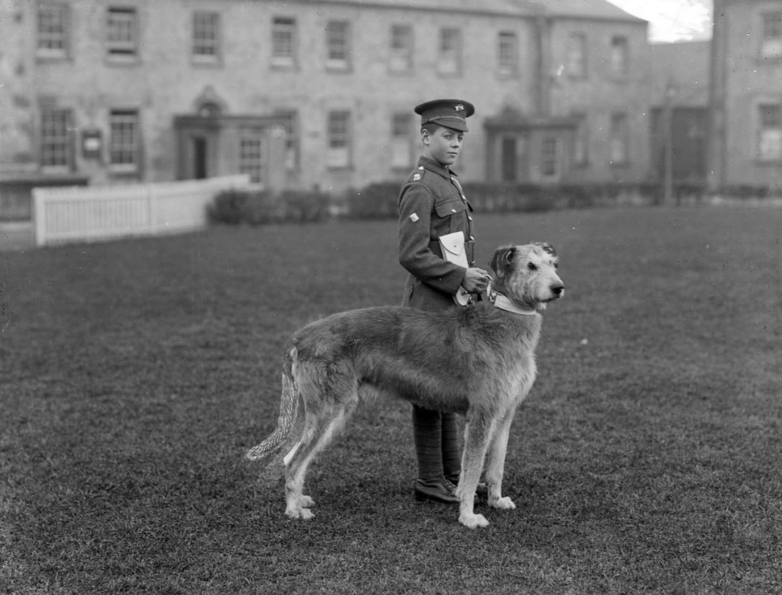 A young member of the Irish Guards at Waterford Barracks with the regiment's mascot, an Irish Wolfhound. 1917.