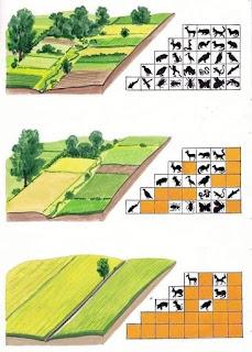 Wielkość gospodarstw rolnych