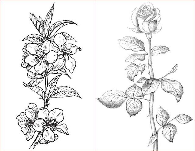 gambar-sketsa-bunga-cantik