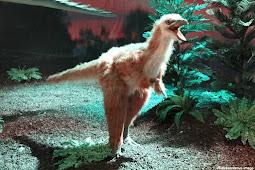 New Study Reveals Alvarezsaur Dinosaurs Rapidly Shrank In Size After Ant-based Diet