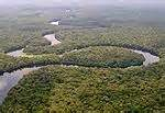 forêt tropicale malgache d'Atsininana