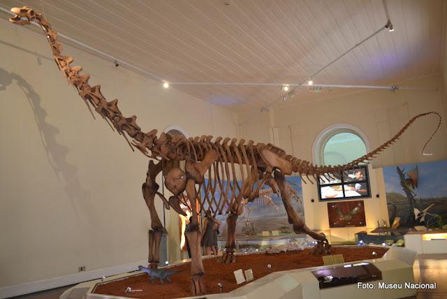 Esqueleto do Maxacalissauro, o maior réptil pré-histórico que habitou terras brasileiras, no Museu Nacional da Quinta da Boa Vista