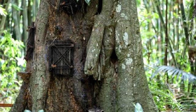 kuburan pohon kuburan bayi di Tongko Sarapung tana toraja