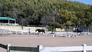 服部緑地乗馬センター