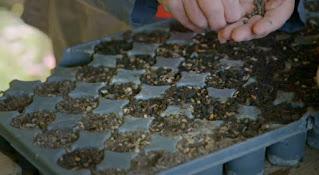 Modular trays of seeds